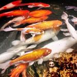 fish_ponds